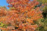 Chalet à louer Chalet Movendo Paysage d'automne au chalet Movendo